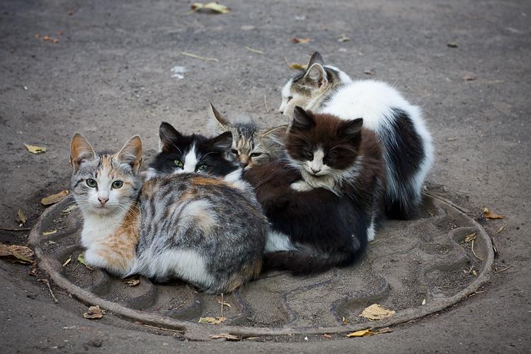 пачка кошек